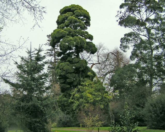 Fota-Gardens-tree