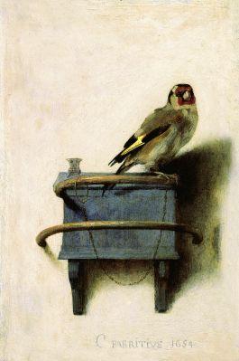 Goldfinch - fabritus