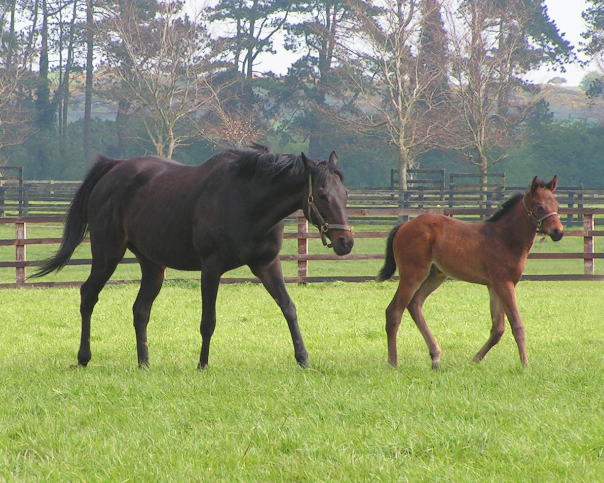 Irish National Stud: Bee Meets The Irish National Stud!